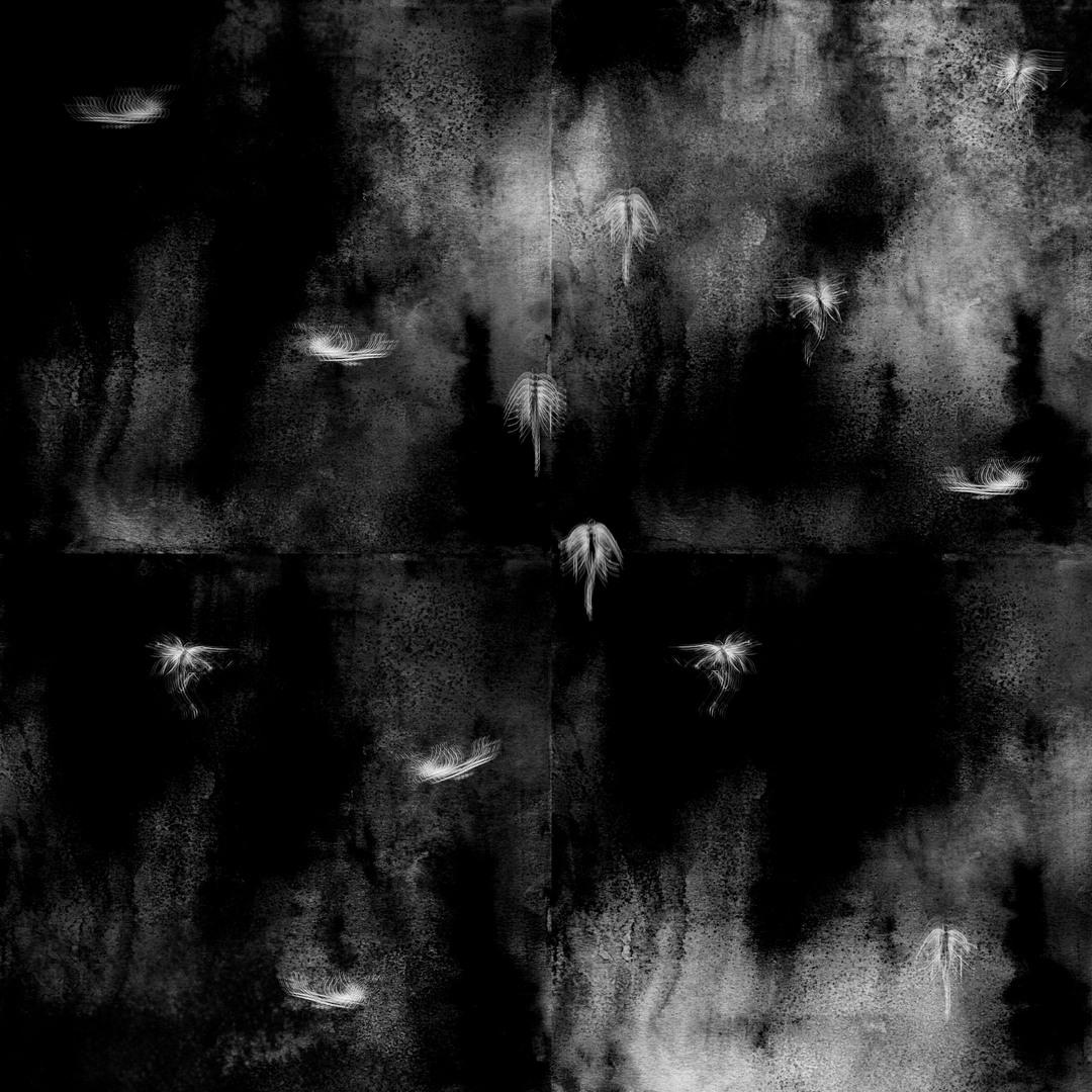 Work by Jorja Finch